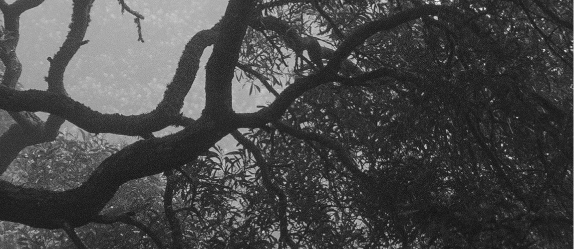 Black and white cropped view from my window.